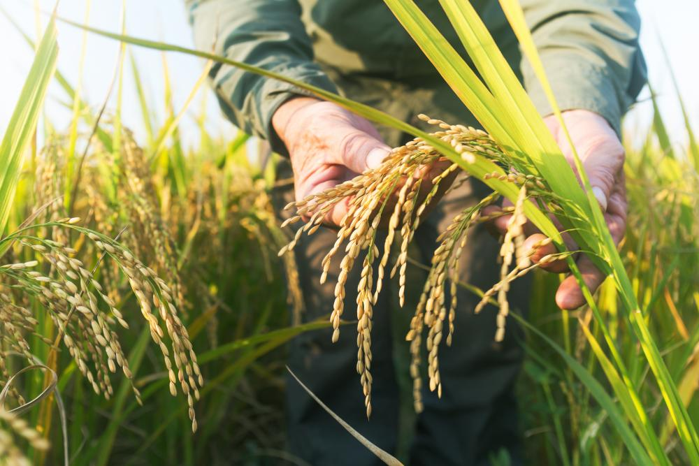 Biotech Crops Are Driving Global Solutions to Climate Change