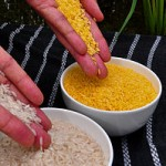 golden rice3